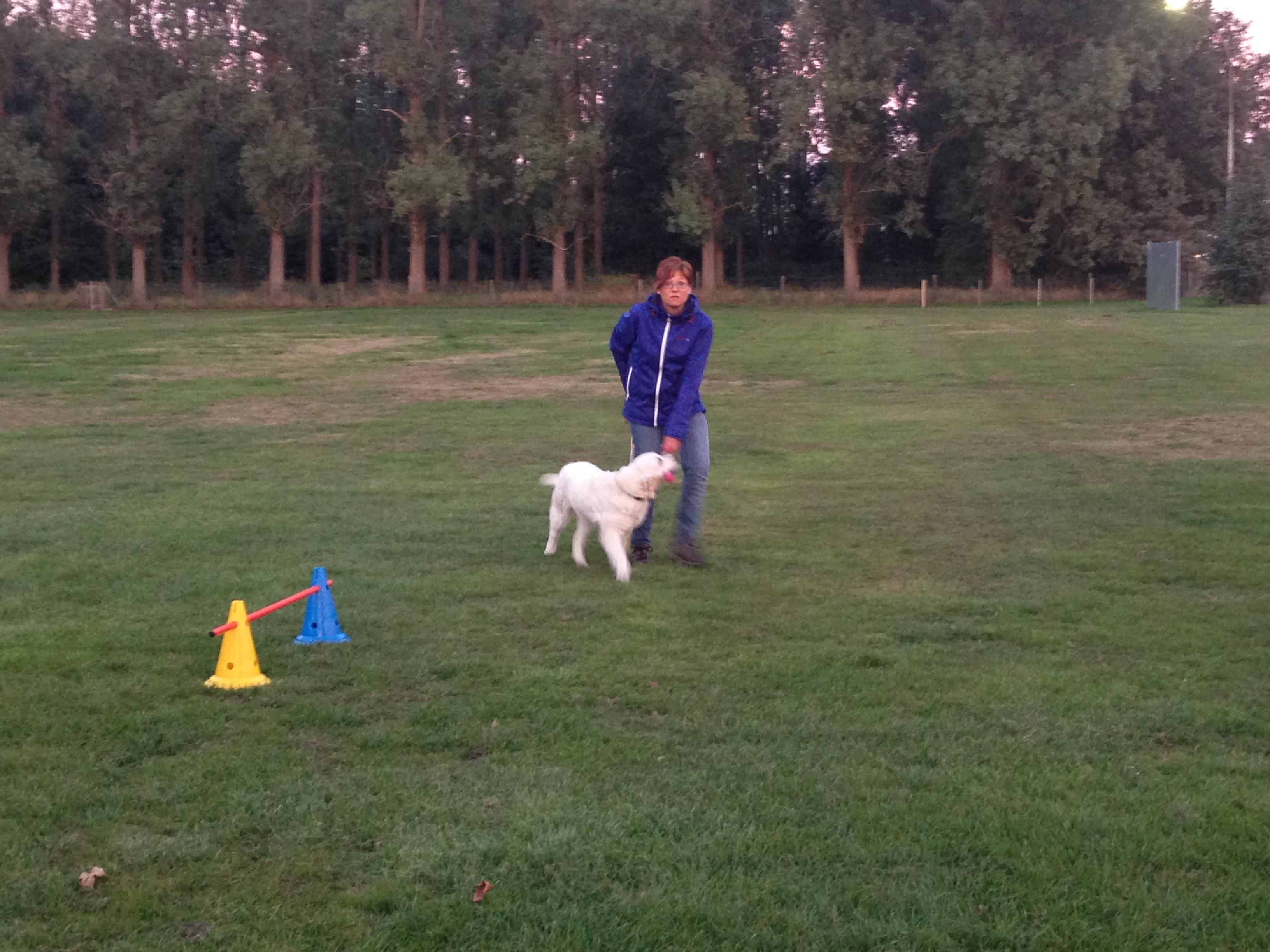 Hondenschool Hulst 2013