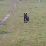 Wandeling Hondenschool Hulst 2012