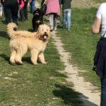 wandeling Hondenschool Hulst