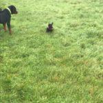 Wandeling Hondenschool Hulst, 3 december