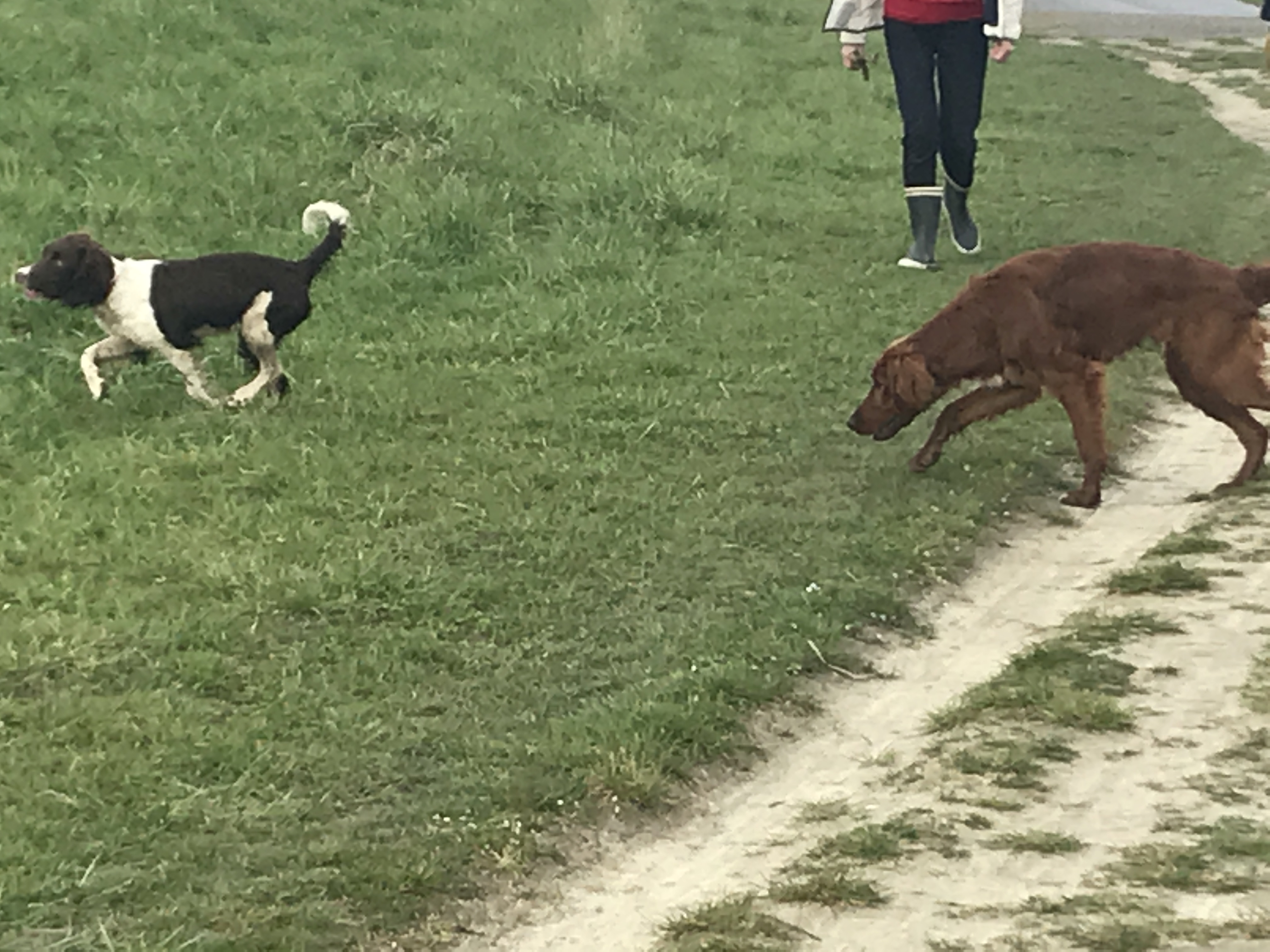 Wandeling Hondenschool Hulst 8 april