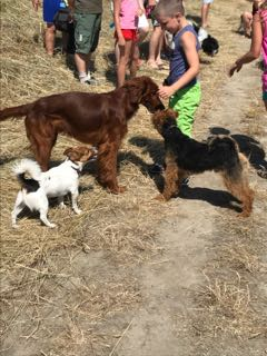 Wandeling Hondenschool Hulst 1 juli