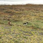 Wandeling Hondenschool Hulst 25 november