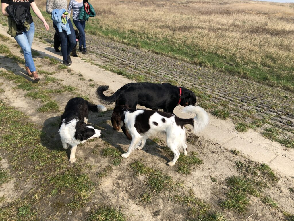 Wandeling Hondenschool Hulst 7 april 2019