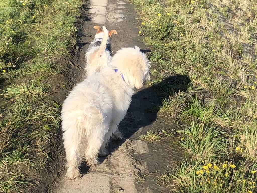hondenschool hulst, honden school in hulst, hondentraining hulst